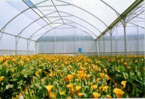 Greenhouses – Bay Orchard Shelters
